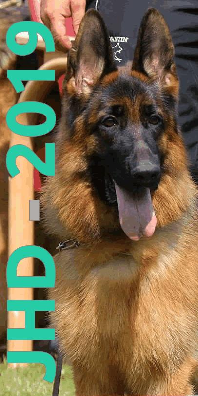VDH Kringgroep Hoogezand: Jonge Honden Dag